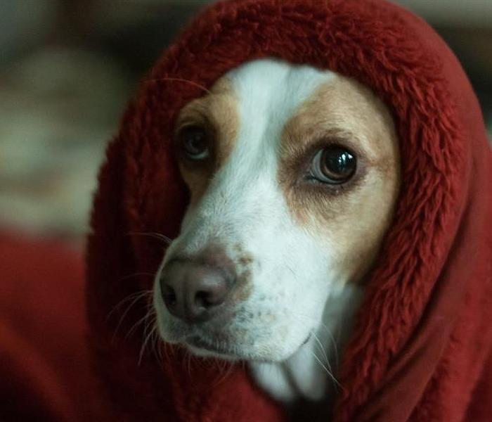 Dog wrapped in a red blanket