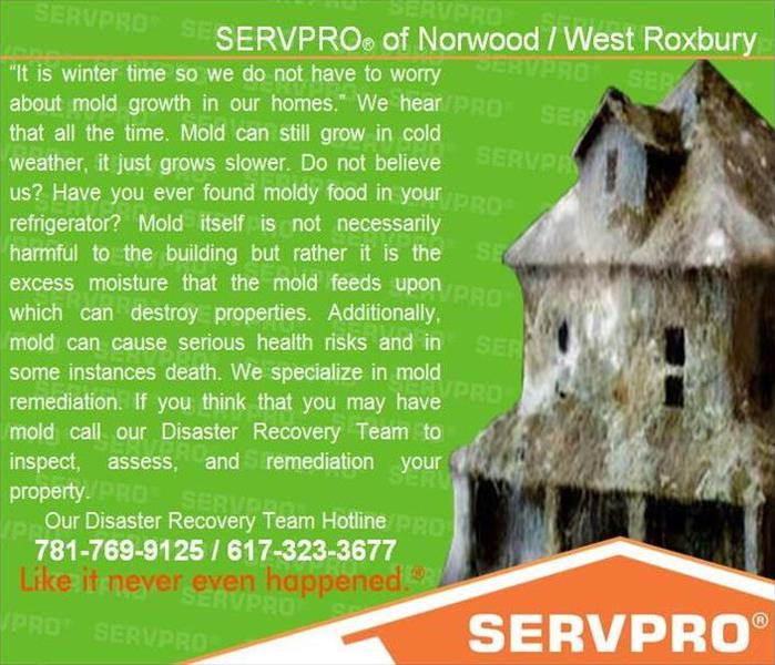 Mold Remediation Recognizing Mold