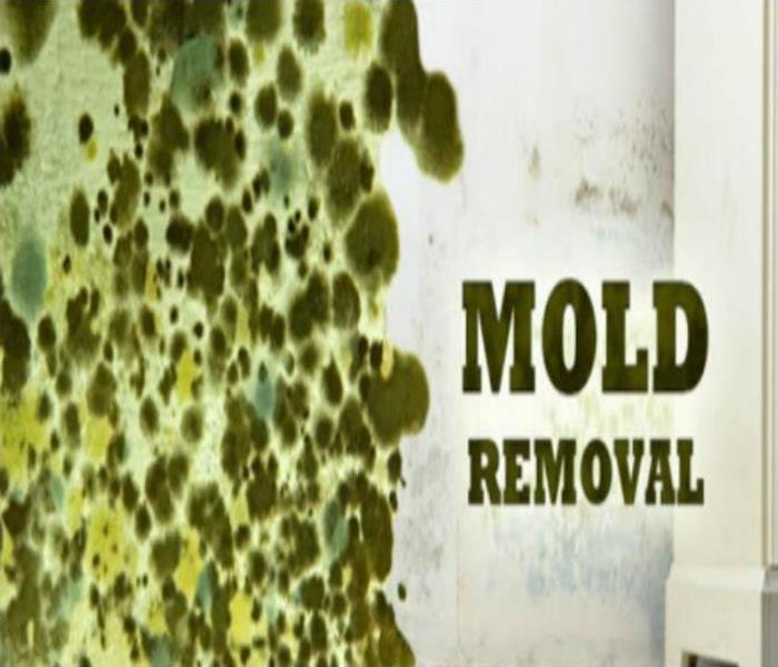 Mold Remediation Mold Removal