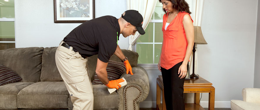 Westwood, MA carpet upholstery cleaning