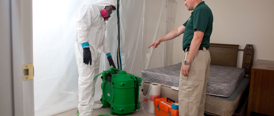 Westwood, MA mold removal process